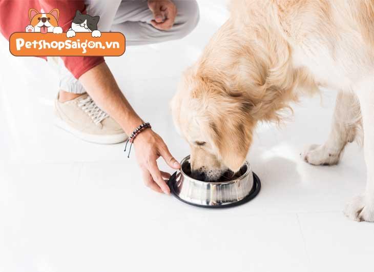 Chó ốm không chịu ăn