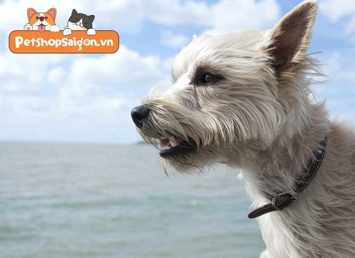 Top 11 giống chó nhỏ dại thông minh được nuôi nhiều nhất