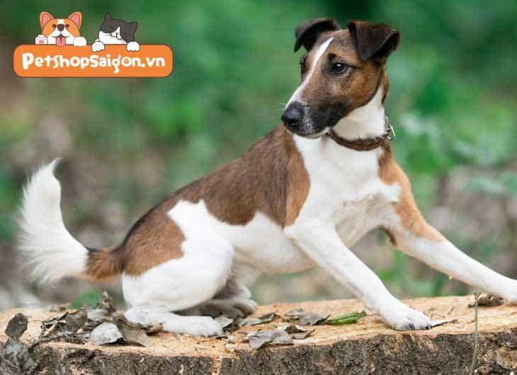 Top 11 giống chó         bé dại thông minh được nuôi nhiều nhất