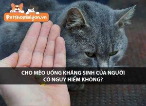 Chó mèo uống kháng sinh của người có nguy hiểm không?
