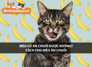 Mèo có ăn chuối được không? Cách cho mèo ăn chuối
