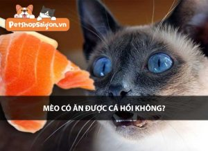 Mèo có ăn được cá hồi không?