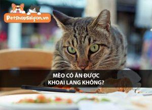 Mèo có ăn được khoai lang không?