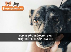 Top 15 dấu hiệu giúp bạn nhận biết chó sắp qua đời